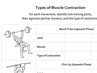 A&P Muscular System: Types of Contraction