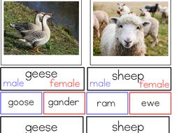 male and female animal names