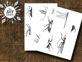 Insects Art - Drawing Insects