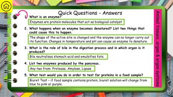 Organisation-AQA-GCSE-Biology-Revision-9-1-Preview-5.jpg