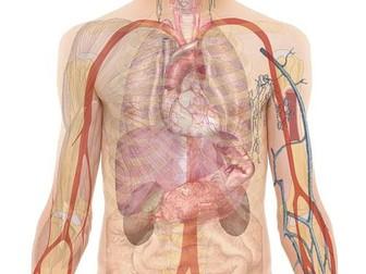 Aerobic Respiration - Lesson Presentation