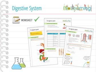 Digestive system worksheet ks3
