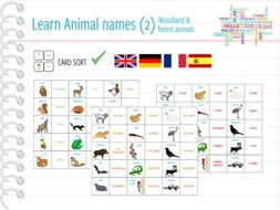 Woodland Pond Animals Animal Names Card Sort Memory By Anjacschmidt Teaching Resources Tes