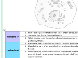 Animal Cell Structure and Function Worksheet (Bloom's Taxonomy) by ...