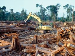 Endangered Rainforests, Animals, Oceans & Global  Warming