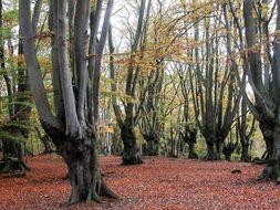 GCSE UK Ecosystems Case Study: Epping Forest