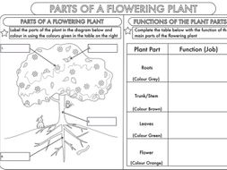 Year 3 Science: Parts of a Plant Worksheet by beckystoke