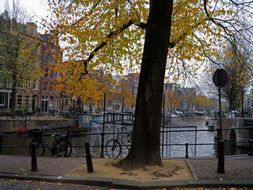 Urban trees & trunks in Amsterdam city