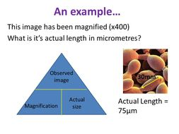 Using a Microscope - OCR AS/A Level Biology
