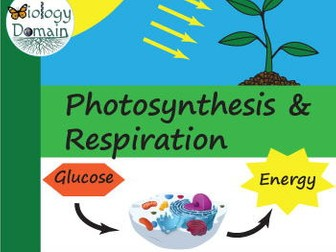 Photosynthesis and Cellular Respiration Crossword and Word Search