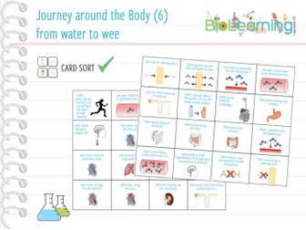 Journey around the body (6): from water to wee - Card sort (KS4)