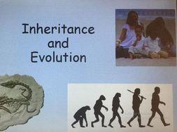 evolution and inheritance year 6 science