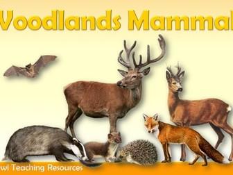 Woodland Mammals