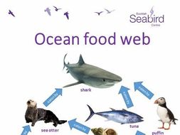 scottish seabird centre ocean food web worksheet by grieveson teaching resources tes. Black Bedroom Furniture Sets. Home Design Ideas