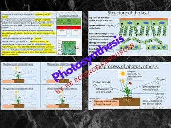 Photosynthesis KS4