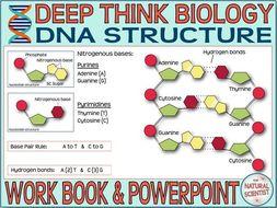 DNA STRUCTURE for GCSE & IGCSE BIOLOGY