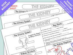 Gcse biology kidney structure and function worksheet updated by gcse biology kidney structure and function worksheet updated ccuart Image collections