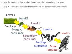 trophic levels by mimi41 teaching resources tes