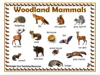 Woodland Mammals Word Mat