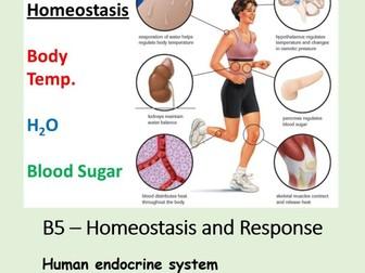 NEW AQA BIOLOGY GCSE - HOMEOSTASIS and RESPONSE - Lesson 7 – Human Endocrine System