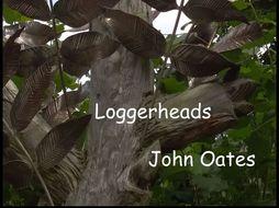 Loggerheads (MP3 & Guitar Score) John Oates