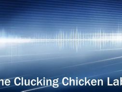Clucking Chicken Sound Activity - Pitch, Frequency, Amplitude, Volume, Vibration, Energy