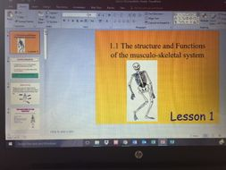 The structure and function of the musculo-skeletal system, lesson 1