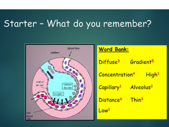 OCR A Level Biology (H020) - Module 3 - Exchange and transport - Mammalian gaseous exchange