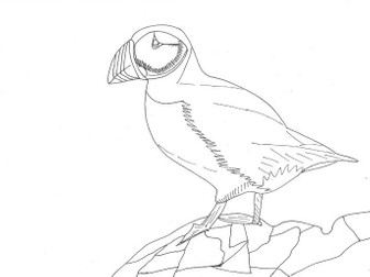 Colour It In: Puffin