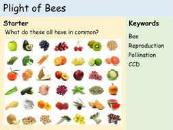 KS3 Plants - The Plight of Bees