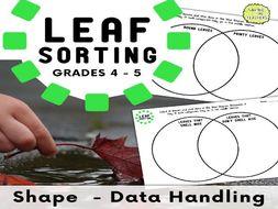 Leaf Sorting - Data Handling - Venn Diagrams - Years 5 and 6