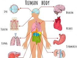 human body: organs by betaeducation - teaching resources - tes, Human Body