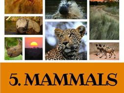 5 GREAT READING LESSONS:  Mammals