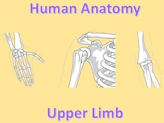 Human Anatomy Quiz: Upper Limb