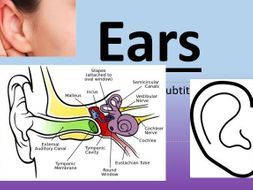 Labelling parts of the ear by carolinearogers teaching resources tes labelling parts of the ear ccuart Choice Image