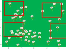 quadrat sampling report