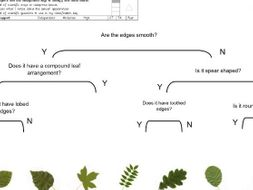 Leaf classification - three levels of worksheet and slides
