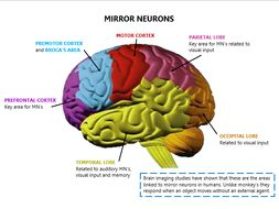 Mirror neurons brain diagram a2 psychology by for Mirror neurons psychology definition