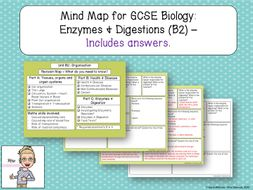 GCSE Biology Revision: Enzymes & Digestion