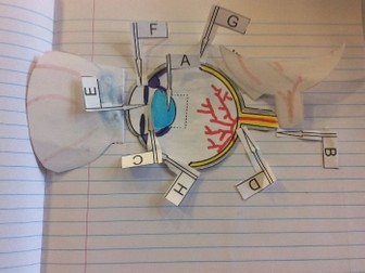3D Dissection of the eye foldable. Create a model of the structure of the eye and pin labels to it.