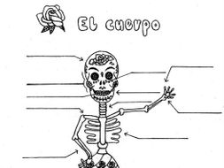 Spanish body parts Day of the Dead practice worksheet no