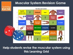 Muscular System Learning Grid - IGCSE Physical Education Revision Game