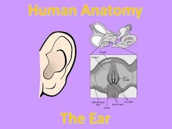 Human Anatomy Quiz: Ear