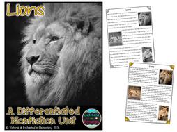 Differentiated Nonfiction Unit: Lions