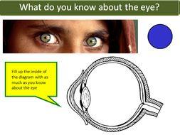B10.5 The eye AQA GCSE 9-1