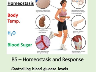NEW AQA BIOLOGY GCSE - HOMEOSTASIS and RESPONSE - Lesson 8 – Controlling blood glucose levels