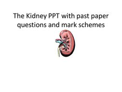 AQA- A2- The Kidney and ADH