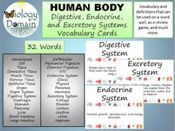Human Body Word Wall Vocabulary Cards Part 2: Basic, Digestive, Excretory, and Endocrine