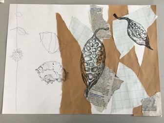 Natural forms mixed surface drawing GCSE art lesson