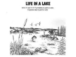 COLOR AND LEARN: Life in a Lake